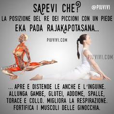 Hata Yoga, Foto Sport, Kapotasana, Yoga World, Basketball Workouts, Yoga Motivation, Yin Yoga, Stretching Exercises, Yoga Poses For Beginners
