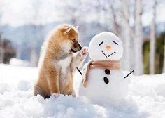 shiba inu with a snowman