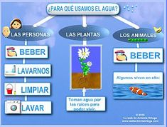 Our social Trends Water Cycle Activities, Activities For Kids, Life Cycle Craft, Sequencing Cards, Science Standards, Social Trends, Home Schooling, Science Lessons, Life Cycles