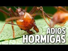 Novedosa receta orgánica, casera y efectiva para acabar con las hormigas | Plantas