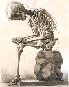 Sofortiger Download sitzen Skelett Körper von acabinetofcuriositie