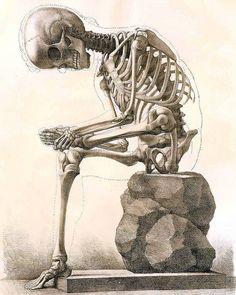 Instant Download Sitting Skeleton Body Bone Structure Anatomy You Print Digital Image Sepia  Prints 8 x 10 Image