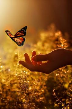 scenery photos with a butterfly - Bing images Beautiful World, Beautiful Places, Beautiful Pictures, Papillon Butterfly, Butterfly Kisses, Monarch Butterfly, Beautiful Butterflies, Butterflies Flying, Belle Photo