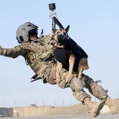 k 9 dogs in action - Google Search