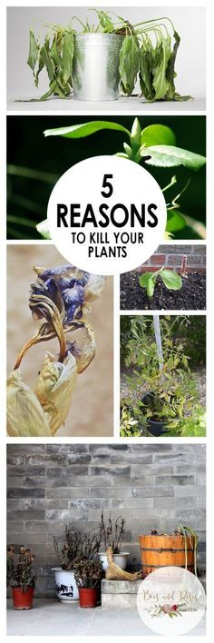 5 Reasons To Kill Your Plants| Kill Your Plants, Heres Why You Should Kill Your Plants, Gardening, PLant Care, Plant Care Hacks, Caring for Plants, How to Care for Plants, Reasons You Should Kill Your Plants, Popular Pin