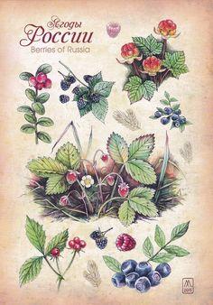 Autumn Illustration, Botanical Illustration, Pancake Drawing, Fruits Images, Vintage Botanical Prints, Drawing Lessons, Color Inspiration, Printable Art, Decoupage