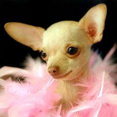 Resultados de la Búsqueda de imágenes de Google de http://2.bp.blogspot.com/-GKYviyKySTw/TpgMRhTkG-I/AAAAAAAAAwY/BxTbiEKvamQ/s1600/cute-dog-2.jpg