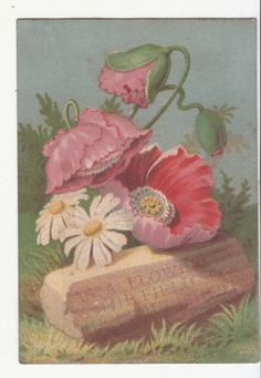 As a Flower in the Field Stone Religious Vict Card c1880s