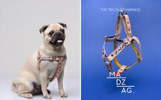 Bauhaus-Inspired Dog Collars & Leashes by MADZAG - Dog Milk