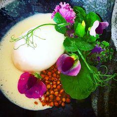 Potato veloute & soft poached egg
