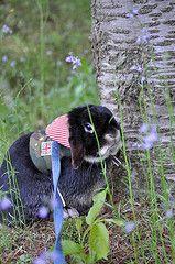 So Cute! Looks likes my Lilly rabbit!