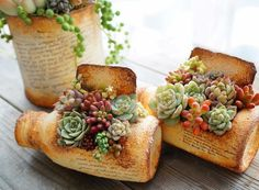 Love the look of these succulent planters! Succulents In Containers, Cacti And Succulents, Planting Succulents, Potted Plants, Indoor Plants, Planting Flowers, Succulent Gifts, Succulent Gardening, Succulent Terrarium