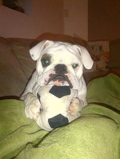 Baggy Bulldogs---You know what? you just scared me with your green eyes baby.