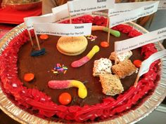 5th grade science project. Cell membrane. Animal membrane. Edible model. Brownie base with chocolate frosting.