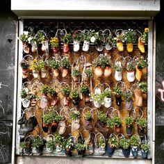 Imagen relacionada Collage, Plants, Collages, Collage Art, Plant, Planets, Colleges