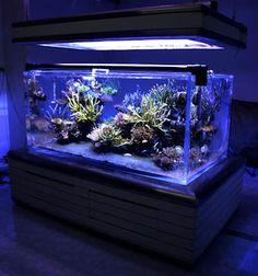Chadchawin Rueangdech's (Last Version) Reef Aquarium