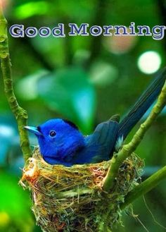 Ideas Blue Bird House Sweets For 2019 Colorful Birds, Small Birds, Colorful Feathers, Bird Kite, Bird Guides, Bird Identification, Hope Is The Thing With Feathers, Bluebird House, Audubon Birds