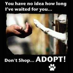 adopt a shelter dog or cat