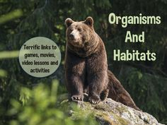 If you study organisms and habitats don't miss this site! It's full of links to games, video lessons, movies and more to use as a whole class, in centers or for group work. Fourth Grade Science, Middle School Science, Elementary Science, Science Classroom, Teaching Science, Science Education, Science For Kids, Forensic Science, Science Fun