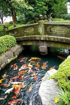 Japanese garden with koi