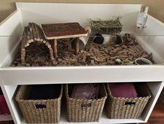 Casa Coco & Chanel : ) #GuinePig #Cavia #Cage