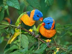 Lovebirds Parrots Waterfall - Android Apps on Google Play