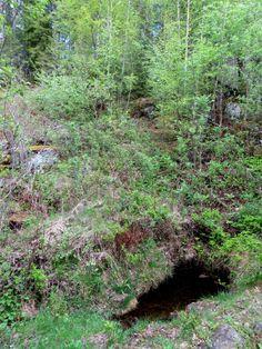 Olavskilden / Eidskog / Hedmark / Plants, Plant, Planets