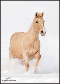 Candy - Bild & Foto von Sonja. Wilde aus Pferde, Esel, Maultiere