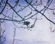 Nursery Art Lavender Lilac Purple Black Bird by HConwayPhotography, $48.00