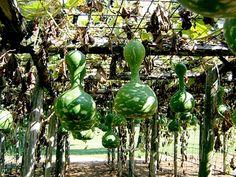 Alabama Gourd Show