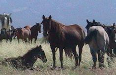 wild_horses3