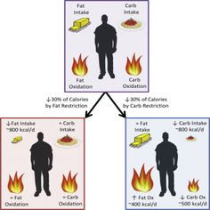 Calorie for Calorie, Dietary Fat Restriction Results in More Body Fat Loss than Carbohydrate Restriction in People with Obesity — ScienceDirect