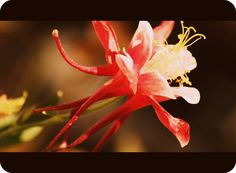 Caitlan Elizabeth Photography