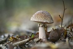 mushroom in the forest by ~SvitakovaEva on deviantART