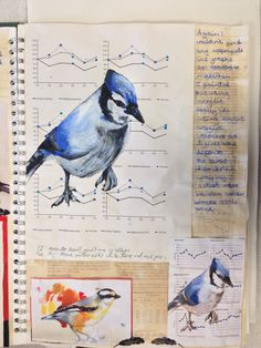 Holly evidence for A level external assignment. Sketchbook Layout, Gcse Art Sketchbook, Sketchbook Ideas, A Level Textiles, Catholic High, Arts Award, School Art Projects, A Level Art, Nature Journal