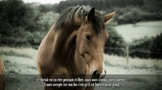 Why Isn't my Horse Gaining Weight? Few animals are able to transmit the poise and elegance that horses do. Their physical appearance makes horses one of the most beautiful animals in. Most Beautiful Animals, Beautiful Horses, Beautiful Creatures, Beautiful Things, Horse Photos, Horse Pictures, Animal Pictures, Nature Animals, Farm Animals