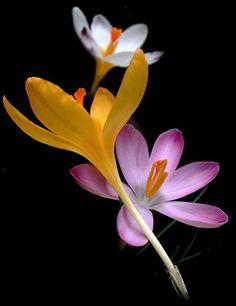 Flowers elegant lighting color