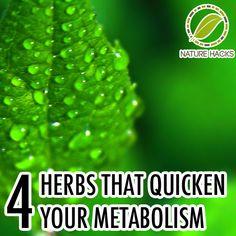 4 herbs that quicken your metabolism
