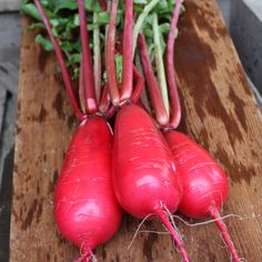 New this year is Red King Radish - Fire engine red roots cut to a bright white interior. Flesh is crisp and juicy, with enough sweetness to eat slice after slice raw. From our NGB member Osborne Quality Seeds Raised Garden Beds, Raised Beds, Gardening Tips, Vegetable Gardening, Grow Your Own Food, Unique Recipes, Make It Yourself, Fire Engine, Vegetables