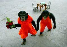 Ahhhhhhh.... romance!