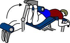Lying Leg Curl Machine for Sports