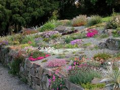 Mini rock garden miniature how to plant a popular growing alpine plants dwa Dwarf Plants, Rock Garden Plants, Tall Plants, Water Garden, Rockery Garden, Sloped Garden, Alpine Garden, Alpine Plants, Rock Garden Images