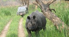 jungle-safari-in-nepal