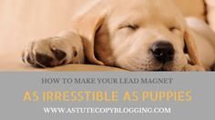 killer lead magnet, offer, How to make your lead magnet as irresistible as puppies, lead magnet, irresistible, puppies