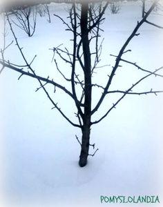 Zima na wsi :  Zima to piękna pora roku mimo mrozów i chłodów jest na co popatrzeć. Szczególnie niepowtarzalne widoki są poza miastem. Zimą na wsi jest czysto i biało, sople mają swój urok i panuje zimowo-bajkowy klimat. Udało nam się uchwycić kilka zimowych obrazów. Dokarmianie ptaków.Sikorki przyłapane na parapecie.   Popatrzmy jak Reksio radzi sobie z zimą:)