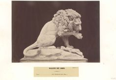 Marble lion.  Мраморный лев.