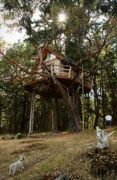 Tree House on Henry Island. Large and beautiful tree house in a very inspiring place built by a retired teacher in 8 years. Located in San Juan Islands, Washington, USA. Beautiful Tree Houses, Cool Tree Houses, Beautiful Forest, Fairy Houses, House Beautiful, Beautiful Beautiful, Houses Houses, Simple Tree House, Building A Treehouse