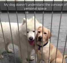 Hilarious Dog Memes That Are Just Awesome urkomische Hunde-Memes, die einfach genial sind Source by davidkonzok Funny Dog Memes, Funny Animal Memes, Cute Funny Animals, Funny Cute, Funny Dogs, Cute Dogs, Dog Jokes, Animal Humor, Funny Animal Clips