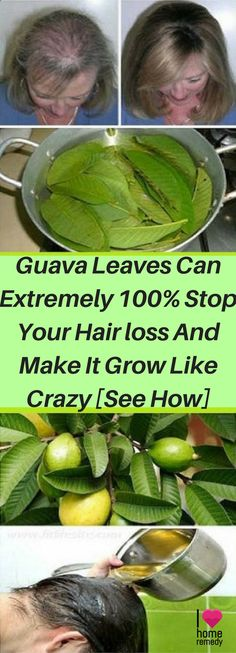 Use Guava Leaves to Stop Your Hair loss And Make It Grow. Hair loss is associated with stress, pregnancy, menopause and weight loss, but it can happen on Anti Hair Loss, Stop Hair Loss, Health Tips For Women, Health And Beauty, Healthy Tips, How To Stay Healthy, Healthy Drinks, Healthy Recipes, Healthy Fiber