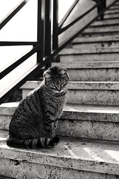 cat on stairs, Rome